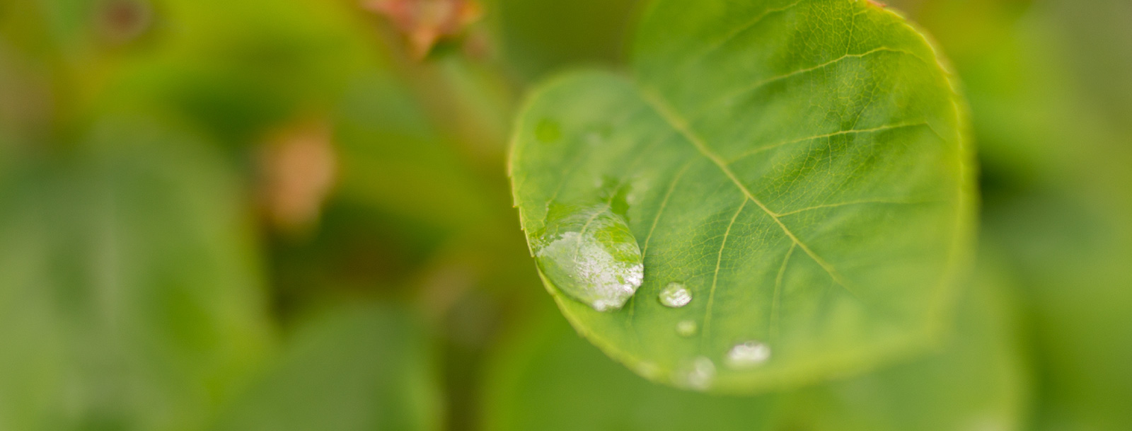 Close-up of water droplets on a leaf