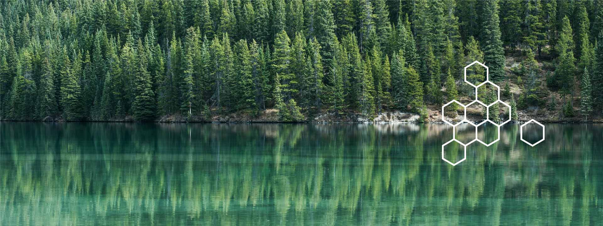 Evergreen trees reflecting in a lake