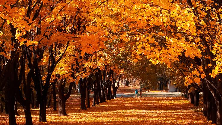 紅葉と落ち葉の風景