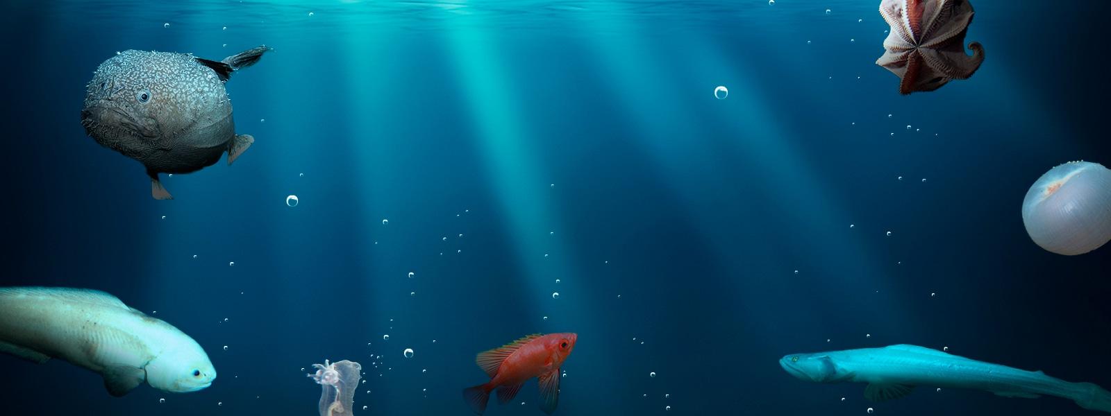 深海・海洋研究