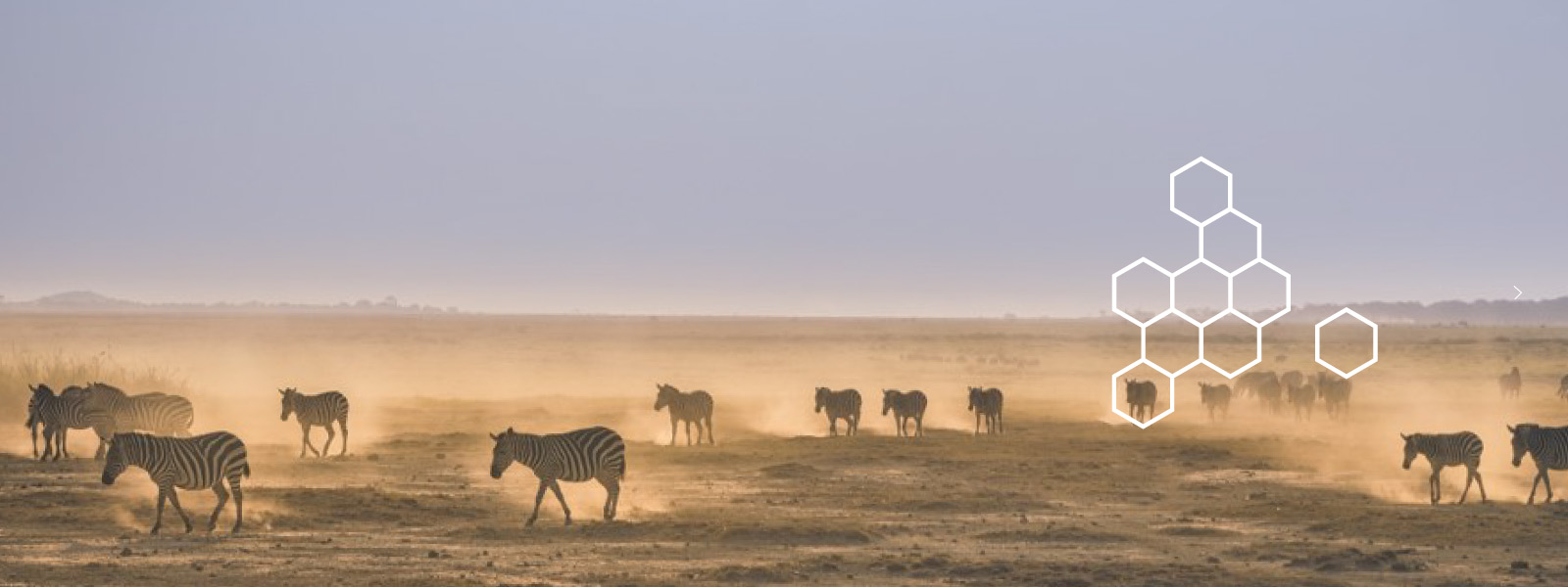 Photo of zebras in a dusty plain