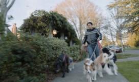 A man walking dogs