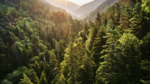 View of a mountain ridge fully covered with trees.
