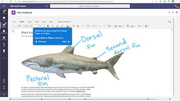 Screen of Microsoft Teams showing a report on shark anatomy in OneNote