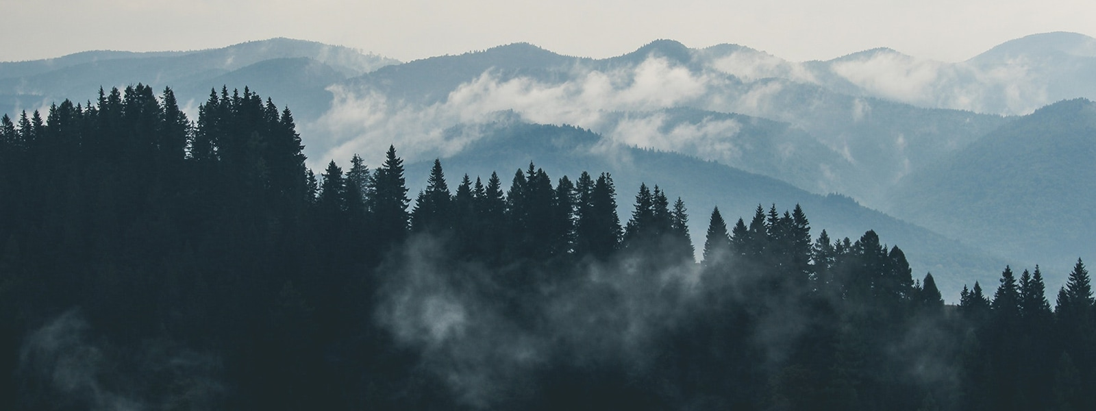 A dark forest in front of a mountain range covered by sparse clouds.
