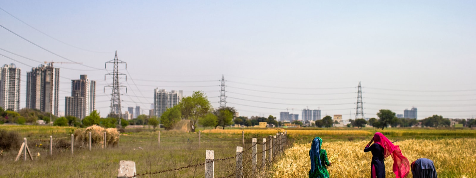 Farm workers harvest wheat crop by hand in fenced-off field with power lines and city buildings visible in the distance.