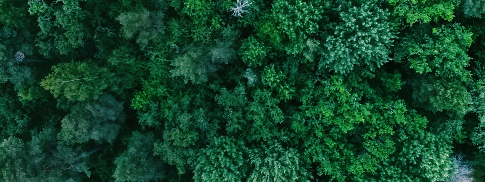 Aerial view of a lush, green forest