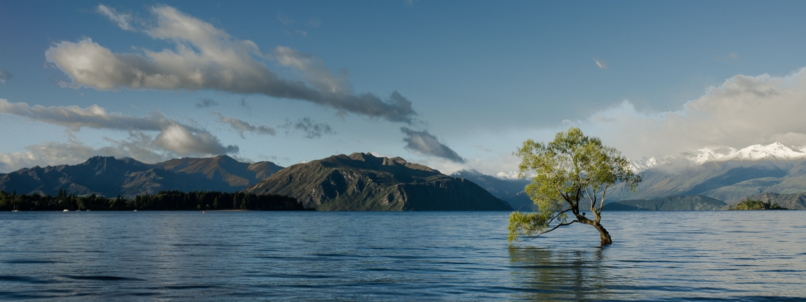 A solitary tree partially in water with a dramatic landscape behind it