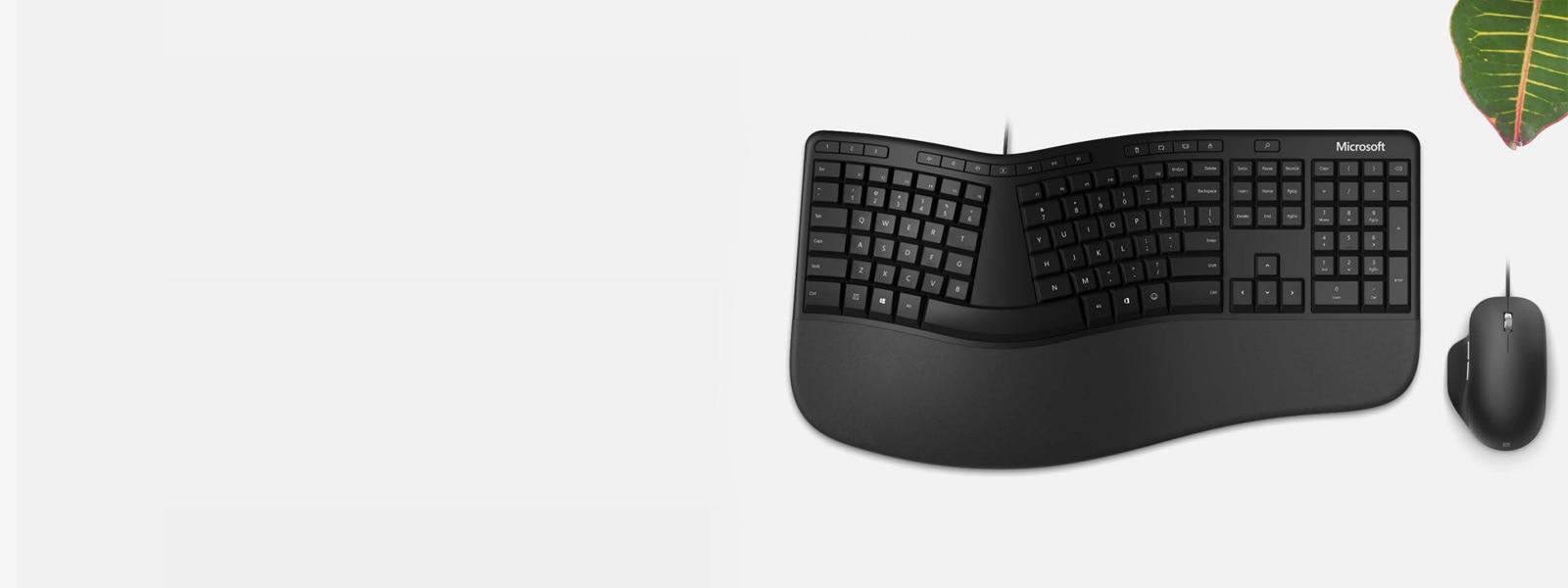Microsoft 人體工學鍵盤和 Microsoft 人體工學滑鼠放在桌上,旁邊有個植物