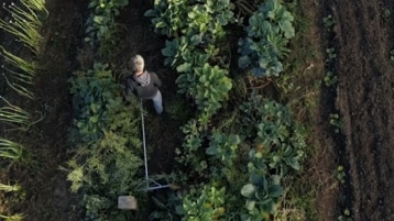 A person in a field of crops.
