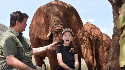 An adult and child interacting with two elephants.