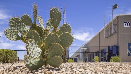 A cactus outside of the new datacenter in Arizona.