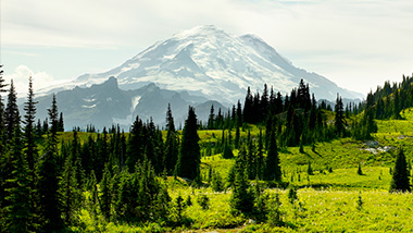 Mount Rainier with forest