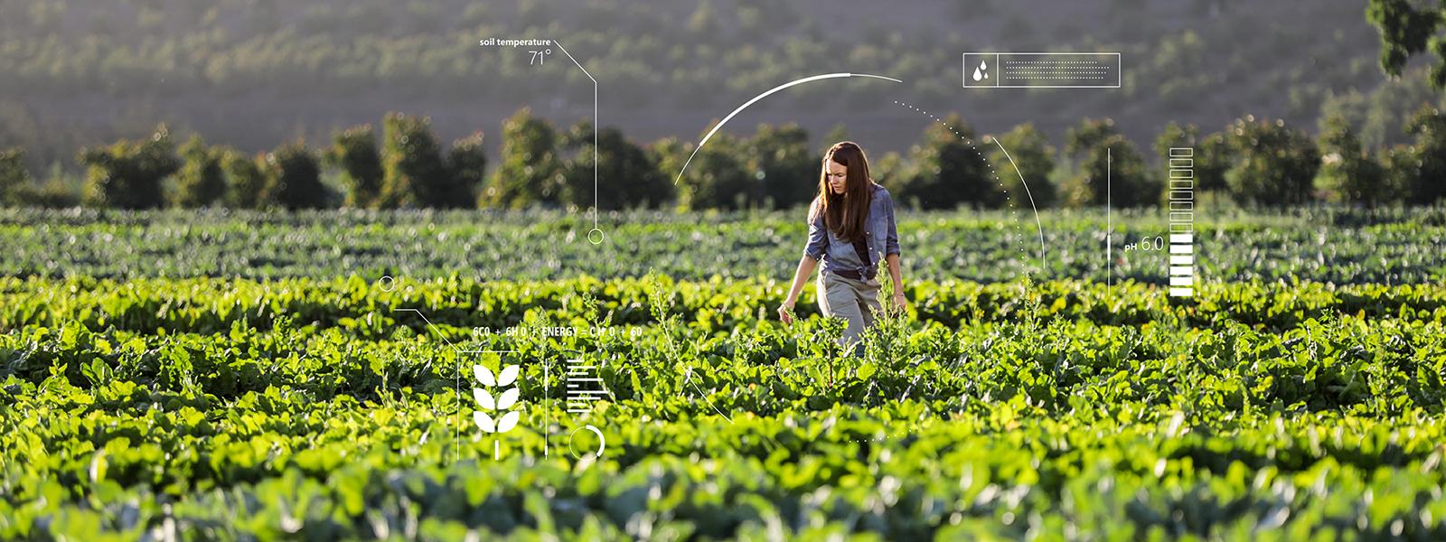 ragazza in un campo coltivato, dashboard essenziale, dati