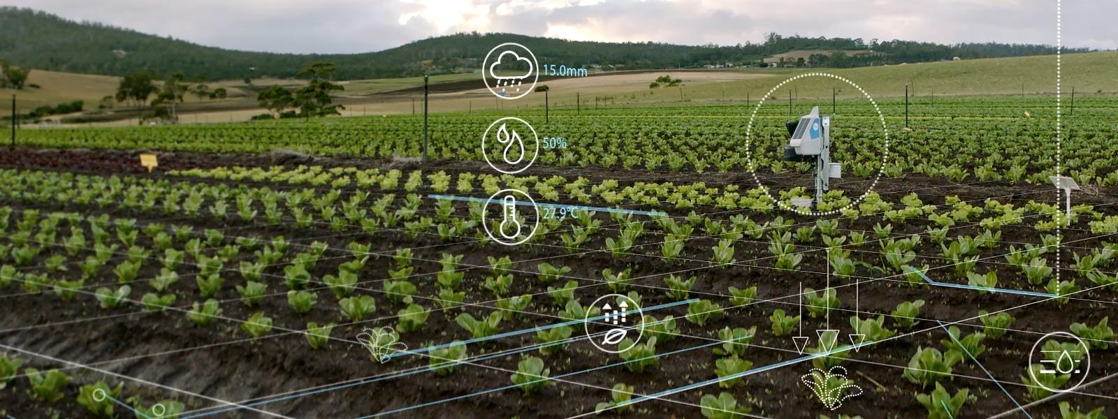 Landwirtschaftlicher Betrieb mit KI-Gerät, das Daten für The Yield sammelt.