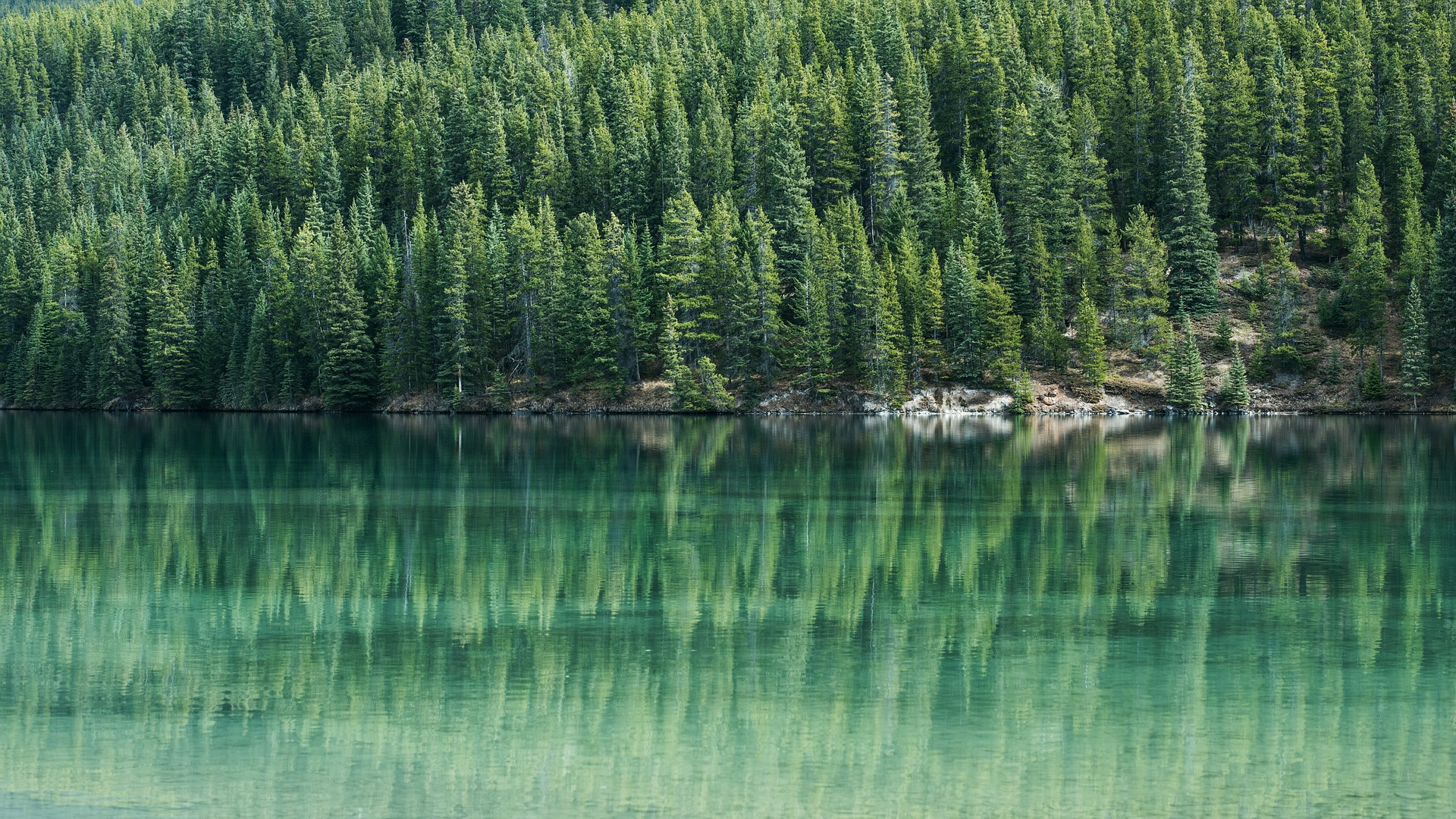 A green lake surrounded by trees.