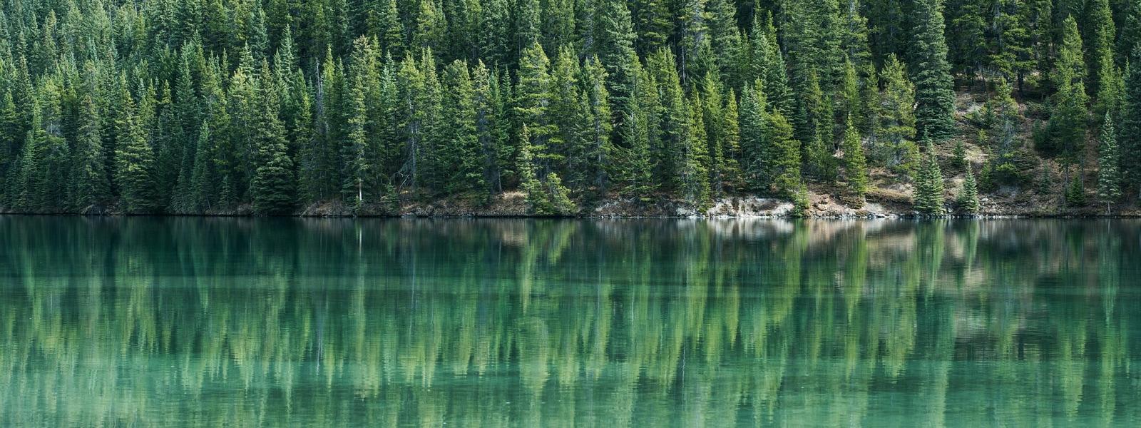 Ein grüner See umsäumt von Bäumen.