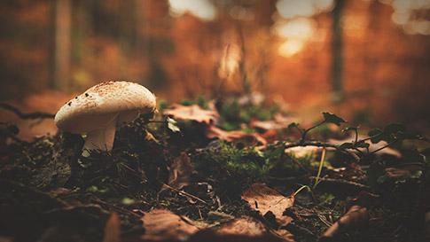 Forest ground with mushroom and leaves