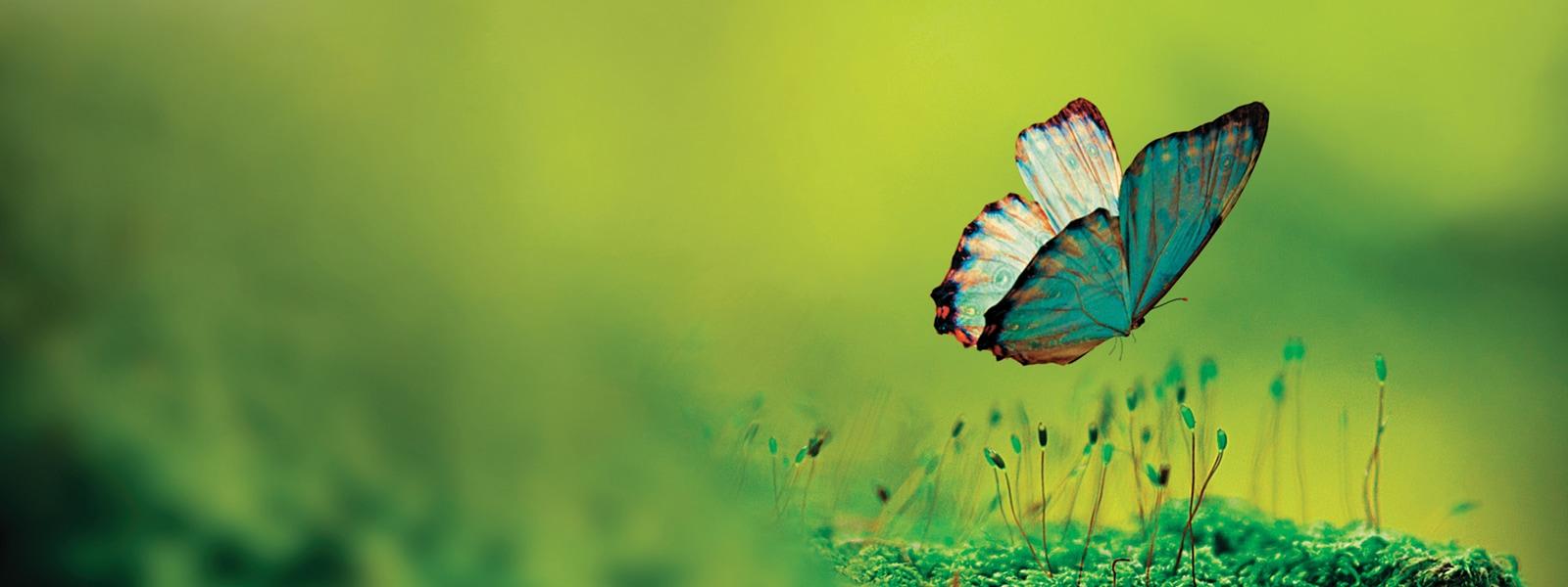 Butterfly landing on moss